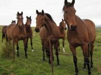 Curious horses.