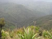 Looking down Blue Gums Ridge