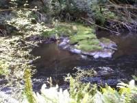 Catlins River scene