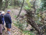 Viewing Traquair Creek