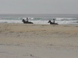 Horses being exercised on Ocean View beach