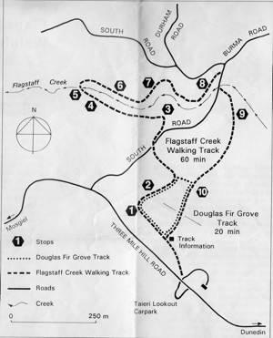 Flagstaff Forest Tracks