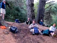 Tea break in pines. Graham, Ken, Lex, Hazel, George