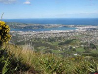 Dunedin from Davies Track above bushline.