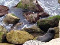 Sea Lion on rocks