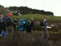 Marsh start