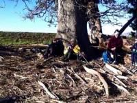 Logs to sit on. (Panorama)