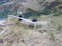 Boulder Beach, Otago Peninsula New Zealand