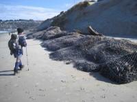 Sand logs? (John pic)