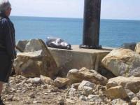 Seal at end of Mole. (John pic)