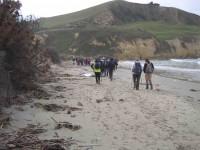 Devastated beach verge. (John pic)