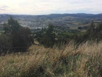 Mosgiel from lookout.