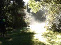 s-Frost melt vapour. (Sharyn pic.)