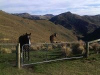 Friendly horses and nice view. (Helen pic and caption.)