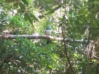 C.4) The Kereru checked us out2c